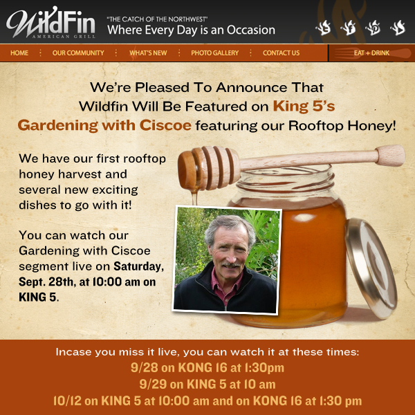 Wildfin Rooftop Honey Announcement